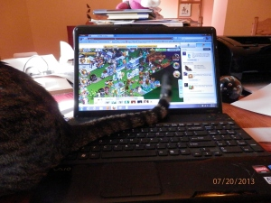 """First, I'll flip my tail onto her keyboard."""