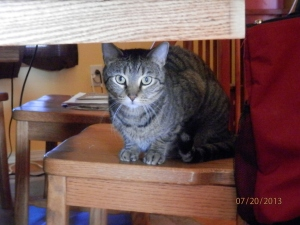 Stripey, hiding under the dining room table