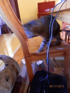Action shot!  Get the mouse!