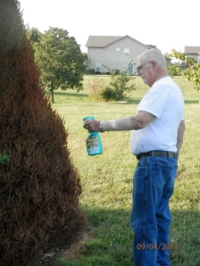Ron, spraying the bag-worms that have almost killed one of our evergreens